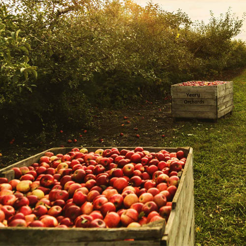 Yeary Orchards